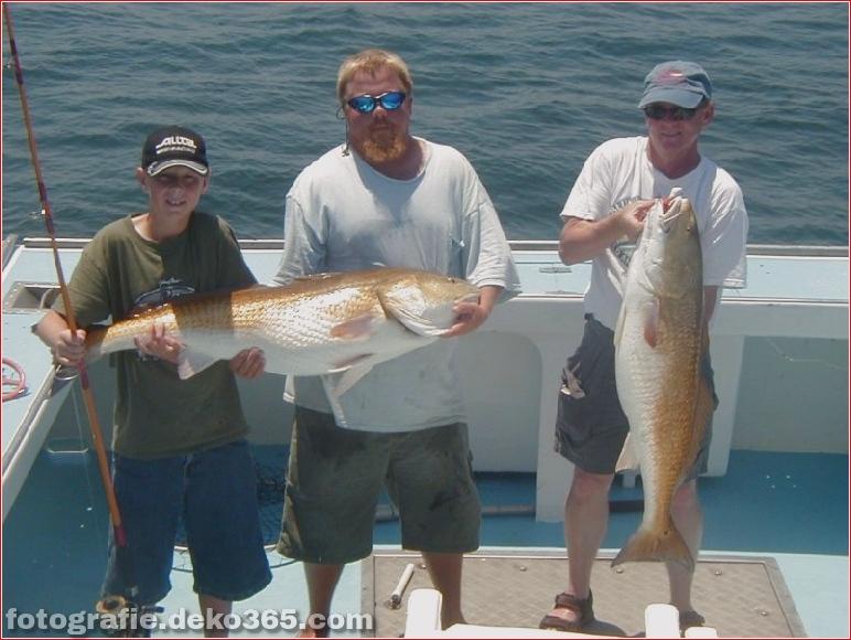 Erfolgreiche Fangbilder - Oregon Inlet Fishing (9)