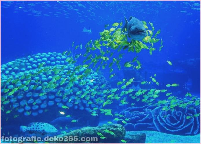 Zhuhai Changlong Ozean Königreich in China (7)