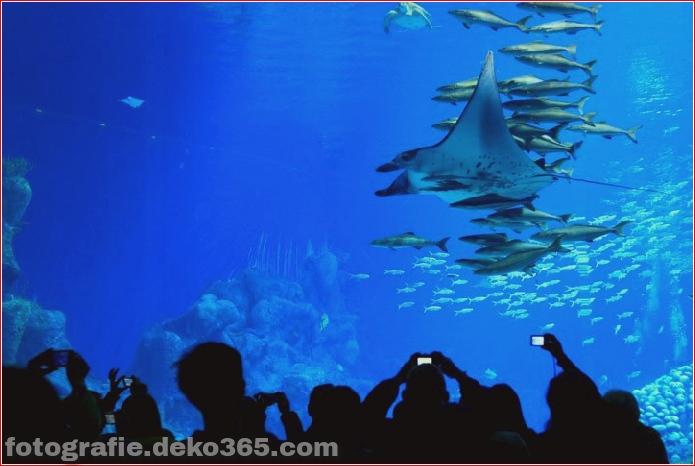 Zhuhai Changlong Ozean Königreich in China (8)