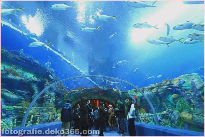 Zhuhai Changlong Ozean Königreich in China (10)
