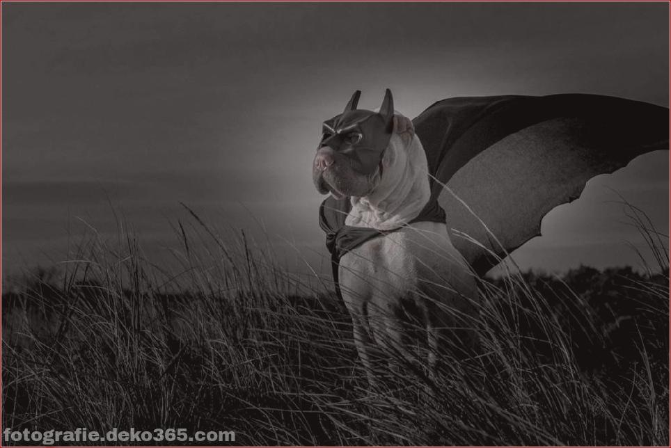 Paddington, der Shar Pei-Hund ist so liebenswert, dass er Schaden anrichtet (2)