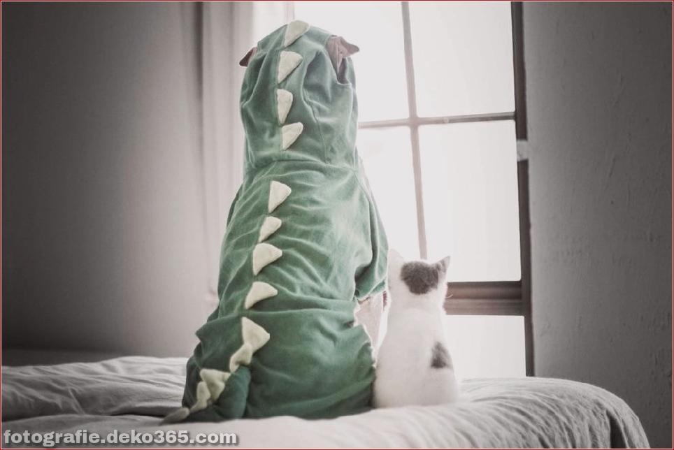 Paddington, der Shar Pei-Hund ist so liebenswert, dass er Schaden anrichtet (4)
