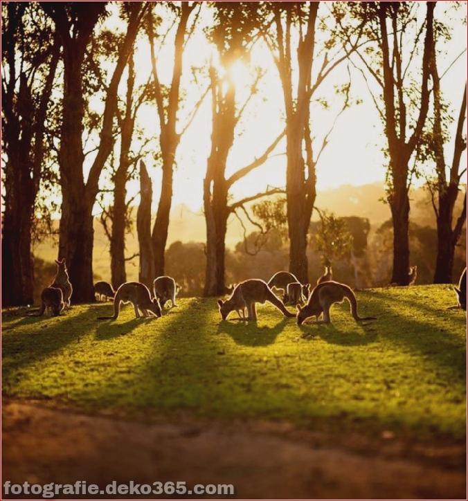 Reise nach Australien (10)
