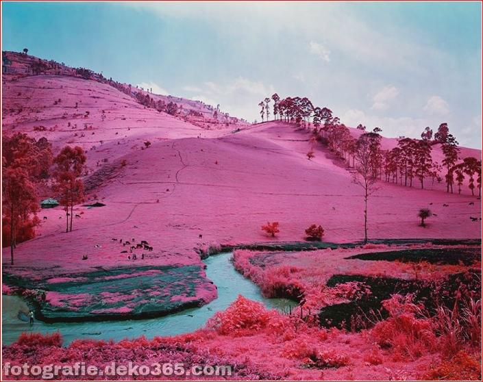 Rosa Farbe Ostkongo_5c9055c18a009.jpg