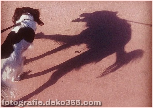 Schatten, die interessant sein könnten (8)