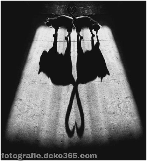 Schatten, die interessant sein könnten (22)