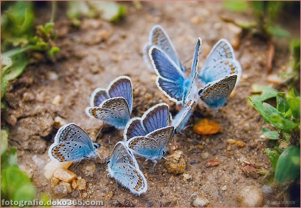 Schmetterlings-Fotografie_5c905f258e054.jpg
