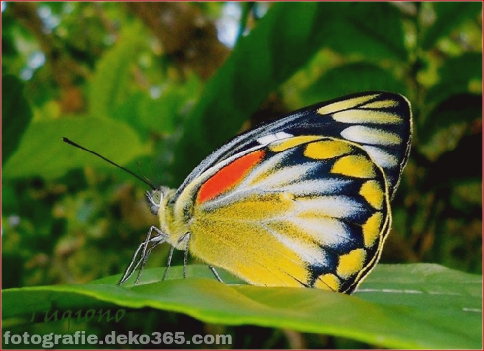 Schöne Schmetterlingsfotografie