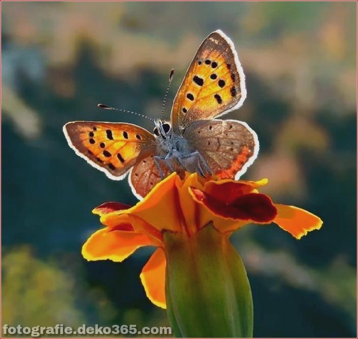 Schmetterling Fotografie