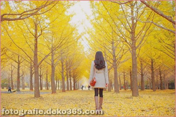 Schöne gelbe Bilder_5c9058a135fdf.jpg