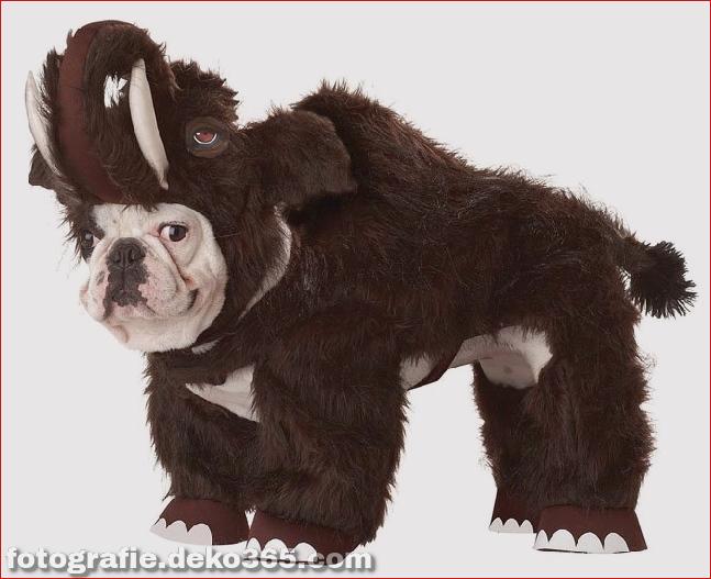 Schöne Halloween Pet Kostüme_5c9040d188887.jpg