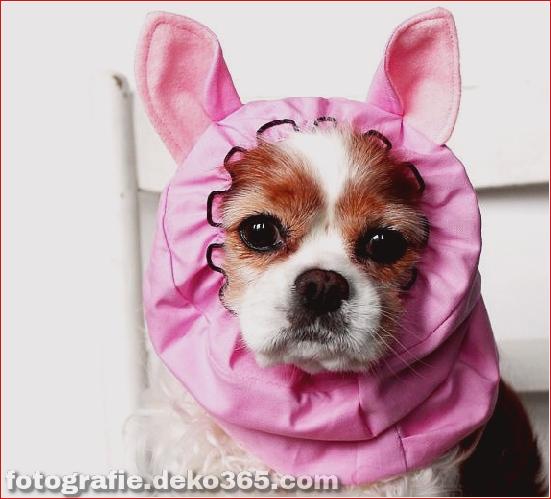 Schöne Halloween Tierkostüme (10)