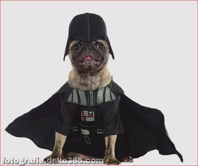 Schöne Halloween-Haustier-Kostüme (18)