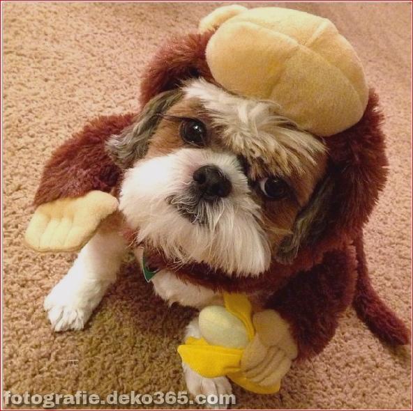 Schöne Halloween Tierkostüme (1)