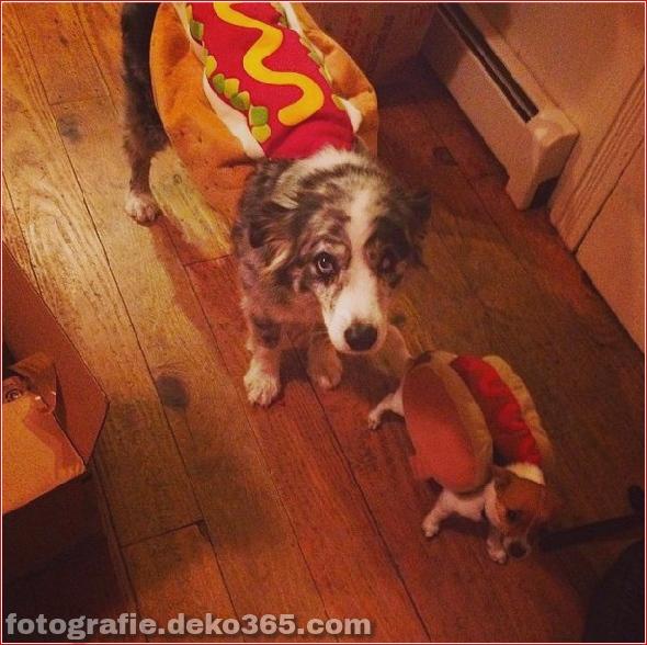 Schöne Halloween-Tierkostüme (2)