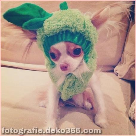 Schöne Halloween-Kostüme für Haustiere (5)