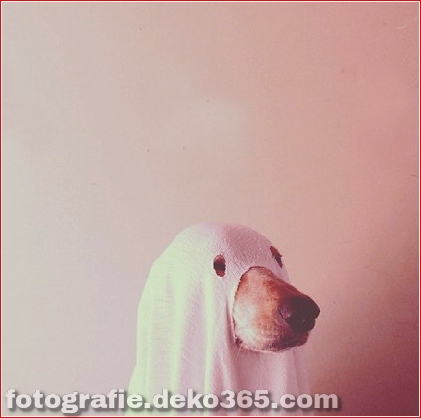 Schöne Halloween-Tierkostüme (24)