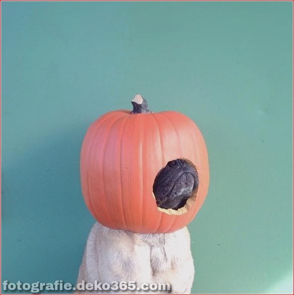 Schöne Halloween-Tierkostüme (27)