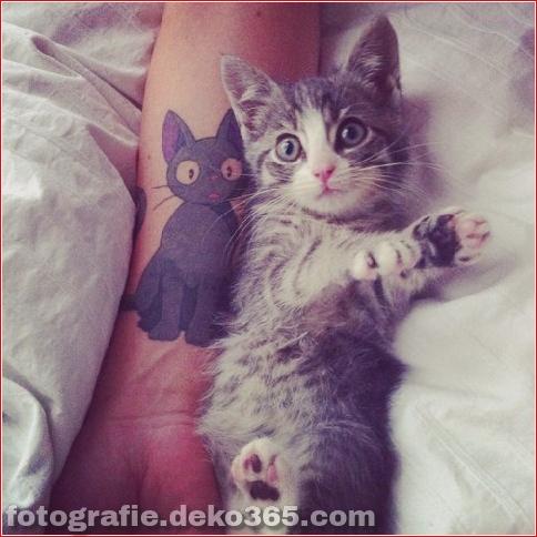 Wunderschöne Katzentätowierungen (5)