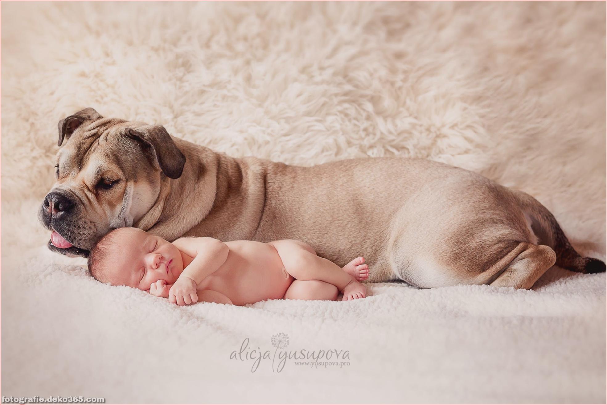 Schöne Kinder- und Tierfotografie_5c8fffa718974.jpg