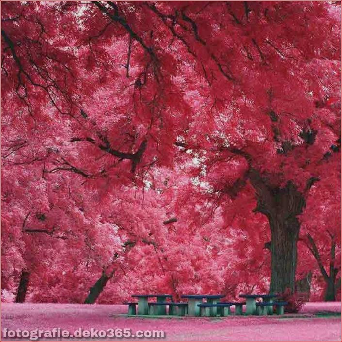 Schöne rosa Farbfotos_5c9064a94e18e.jpg