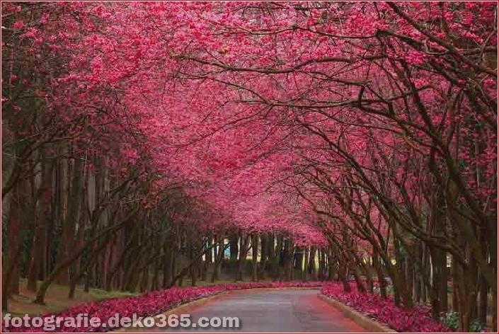 Schöne rosa Farbfotos_5c9064ac60195.jpg
