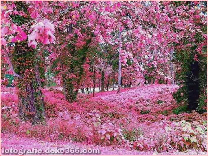 Schöne rosa Farbfotos_5c9064b347ed2.jpg