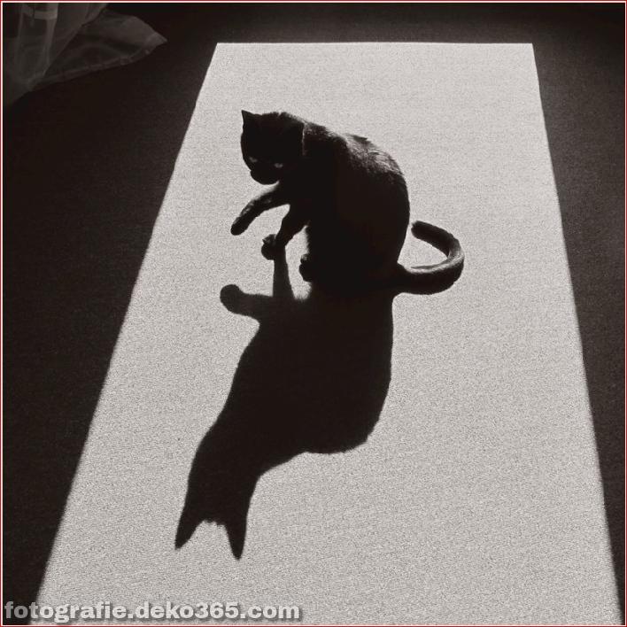 Schöne Schattenfotografie_5c9067b8e53f0.jpg