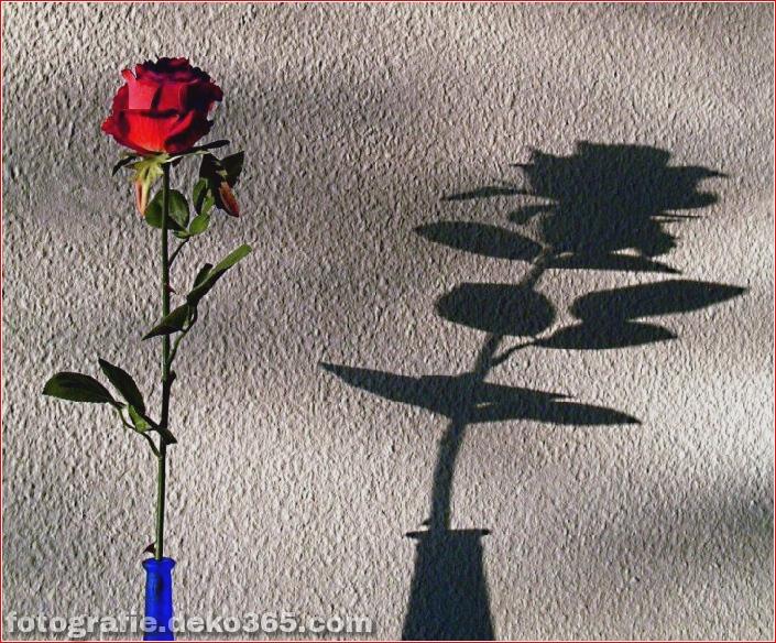 Schöne Schattenfotografie_5c9067bc7efd6.jpg