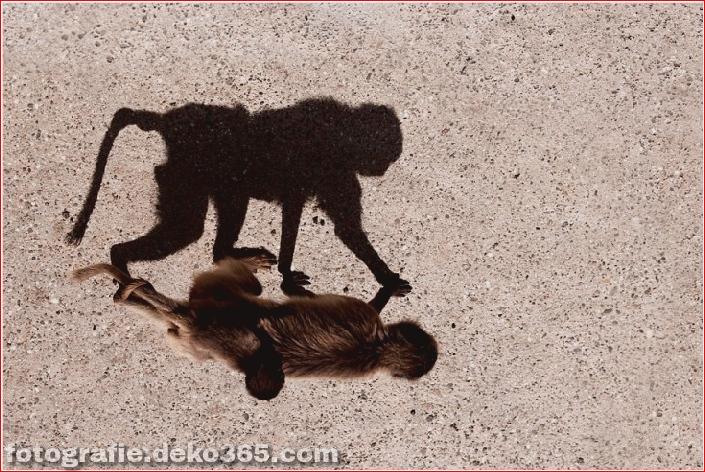 Schöne Schattenfotografie_5c9067bfdffcb.jpg