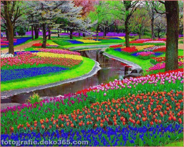 Schöner niederländischer Blumengarten_5c904f0f36896.jpg