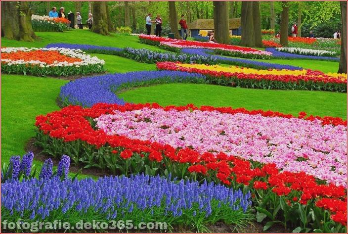 Weltgrößter Blumengarten - Niederlande (1)