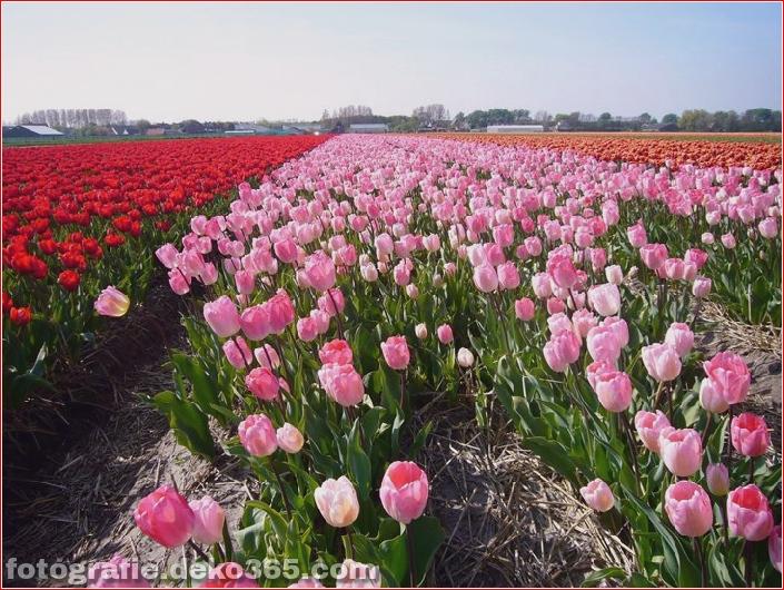 Weltgrößter Blumengarten - Niederlande (6)