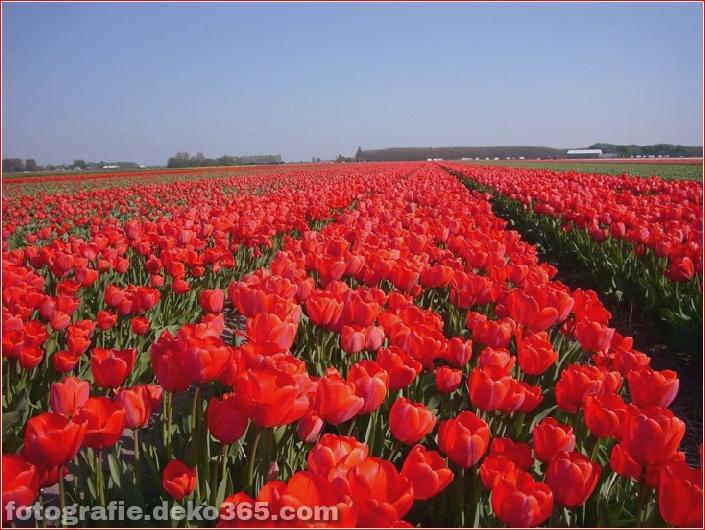 Weltgrößter Blumengarten - Niederlande (7)