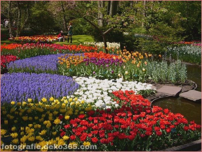 Weltgrößter Blumengarten - Niederlande (8)