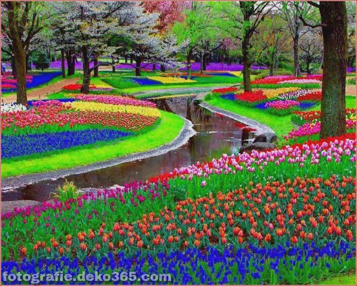 Weltgrößter Blumengarten - Niederlande (9)