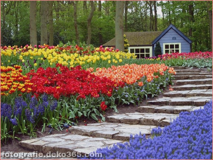 Weltgrößter Blumengarten - Niederlande (10)