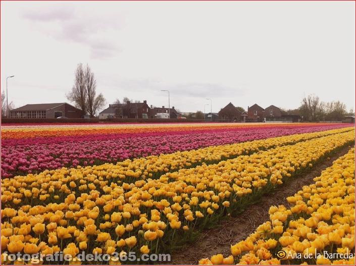 Weltgrößter Blumengarten - Niederlande (11)