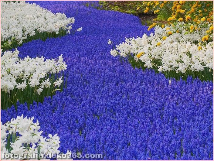 Weltgrößter Blumengarten - Niederlande (12)