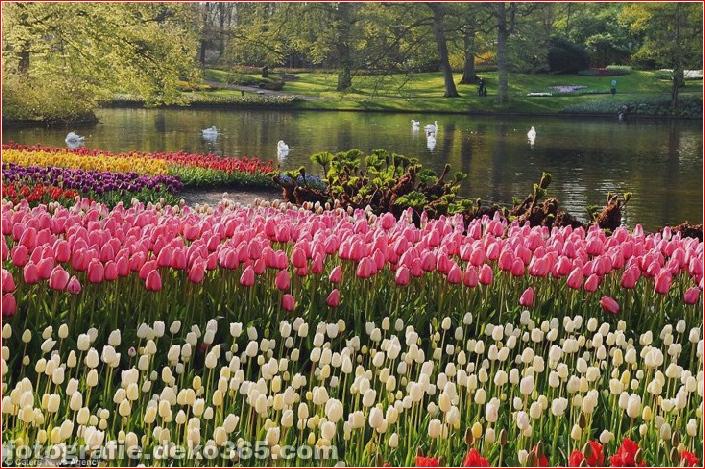 Weltgrößter Blumengarten - Niederlande (13)