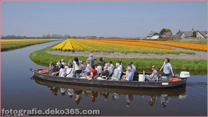 Weltgrößter Blumengarten - Niederlande (15)