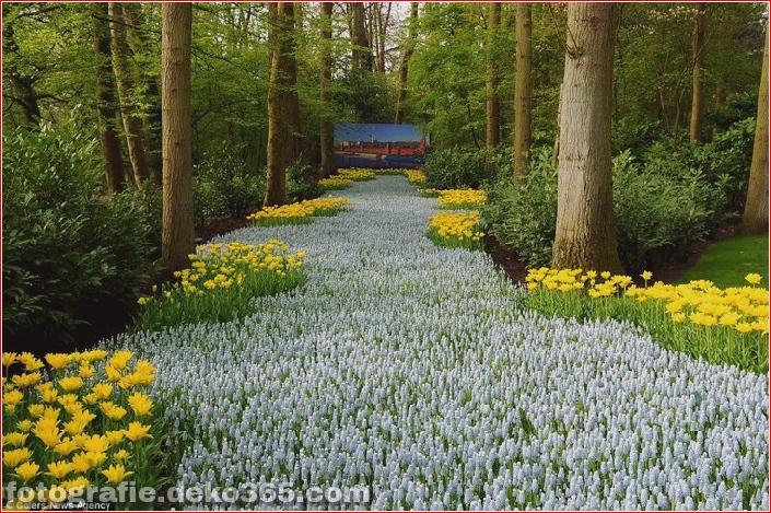 Weltgrößter Blumengarten - Niederlande (16)