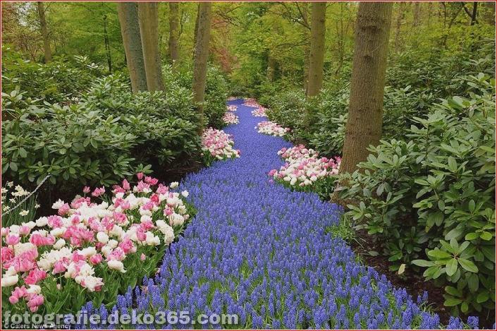 Weltgrößter Blumengarten - Niederlande (17)