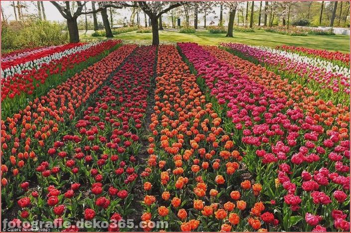 Weltgrößter Blumengarten - Niederlande (18)