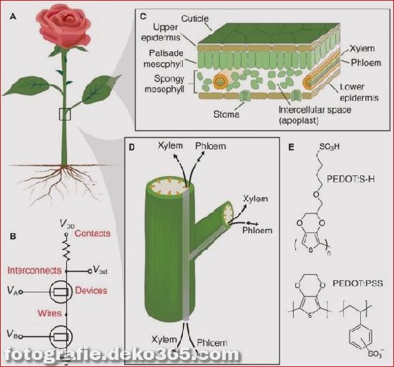 Die erste elektronische Cyborg-Rose der Welt (6)
