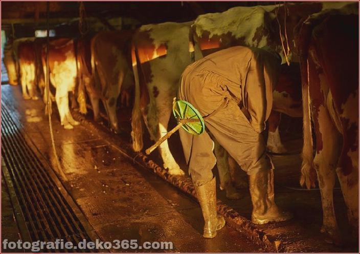 Schweizer Käsehersteller_5c90421aeb2cb.jpg