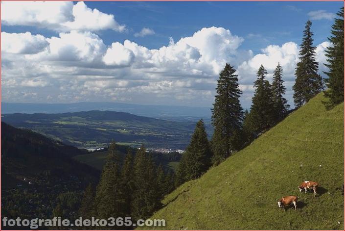 Schweizer Käsehersteller herstellen (2)