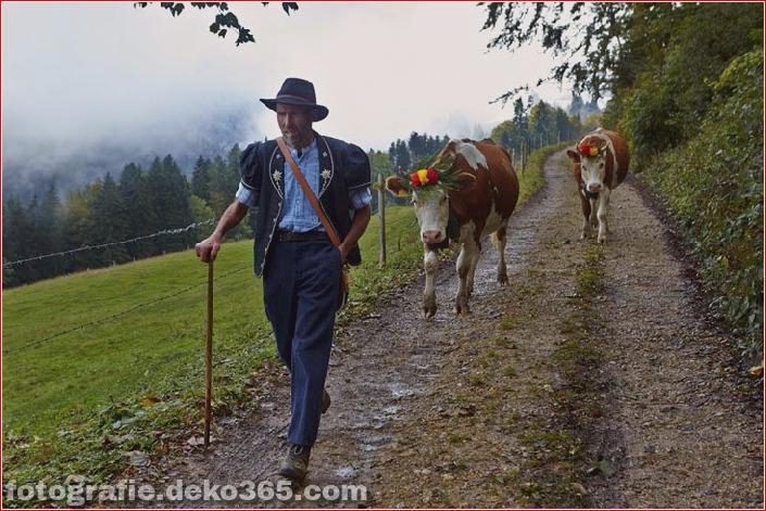 Schweizer Käsehersteller herstellen (4)