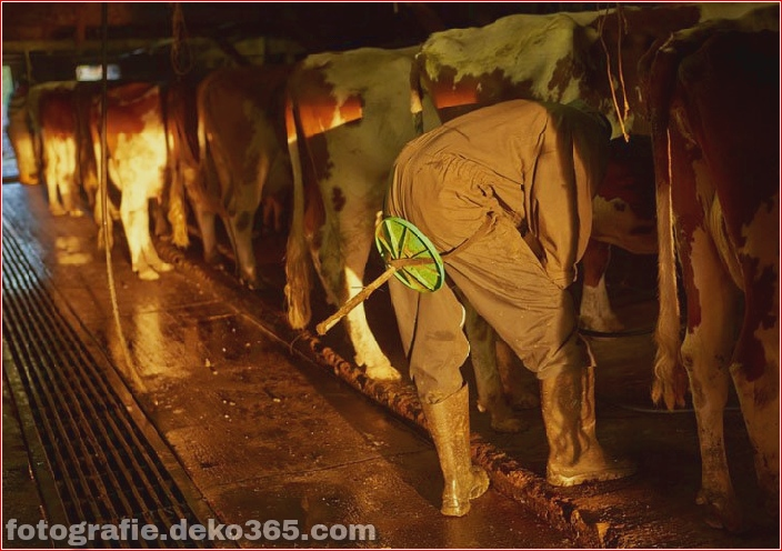Schweizer Käsehersteller_5c904233d0d2b.jpg