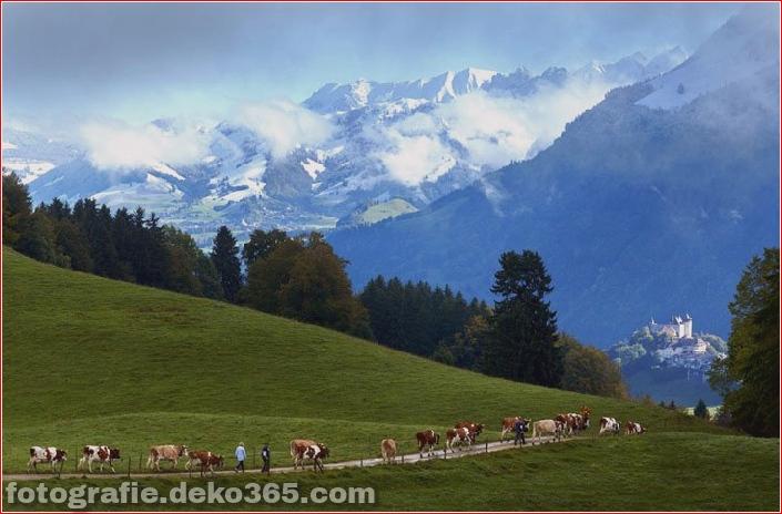 Schweizer Käsehersteller_5c904236d1d9b.jpg